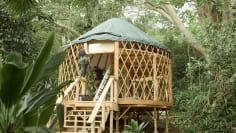 A Yurt in the Rainforest